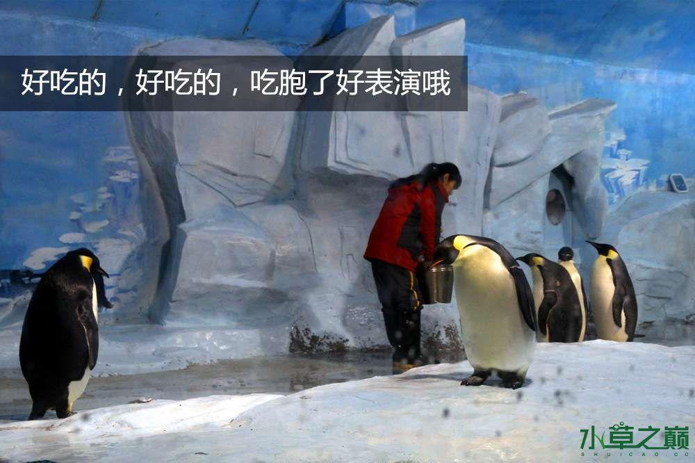 假期天津自由行142P呈现 南昌龙鱼论坛 南昌龙鱼第9张