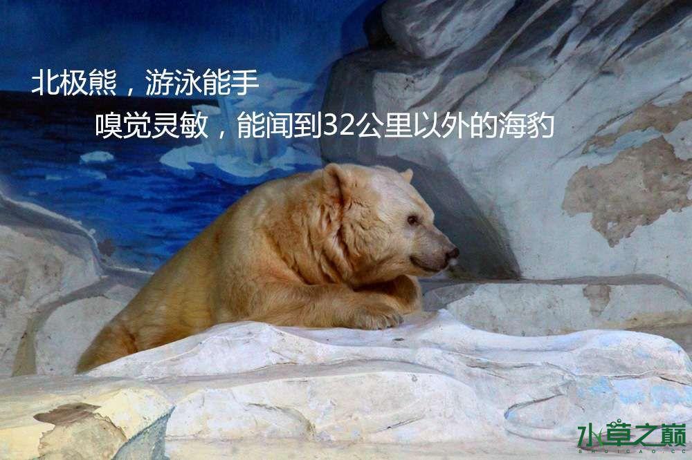 假期天津自由行142P呈现 南昌龙鱼论坛 南昌龙鱼第13张