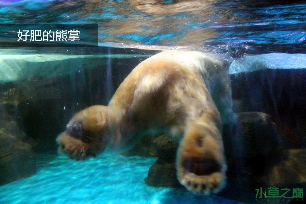 假期天津自由行142P呈现 南昌龙鱼论坛 南昌龙鱼第14张