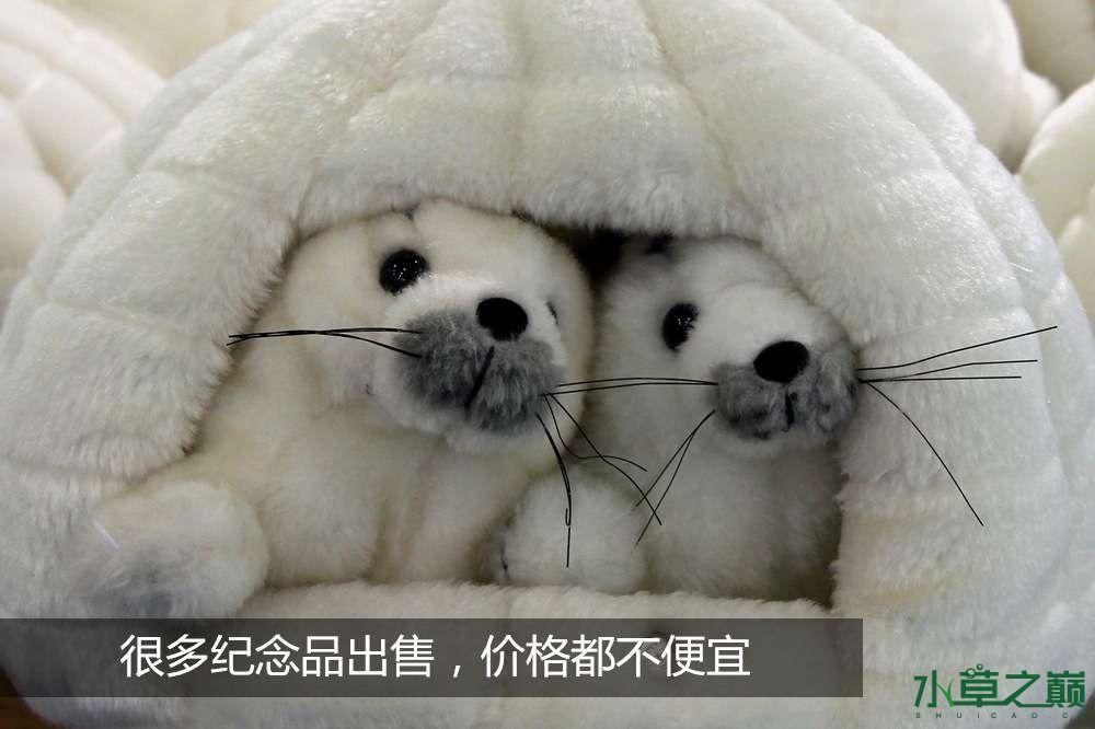 假期天津自由行142P呈现 南昌龙鱼论坛 南昌龙鱼第18张