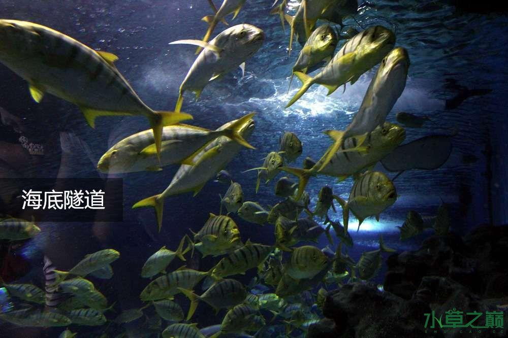 假期天津自由行142P呈现 南昌龙鱼论坛 南昌龙鱼第19张
