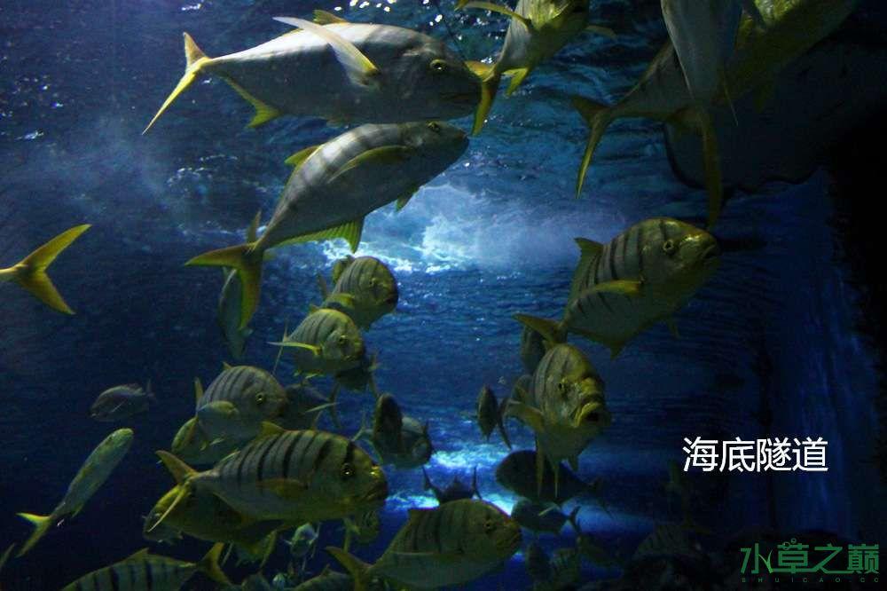 假期天津自由行142P呈现 南昌龙鱼论坛 南昌龙鱼第20张