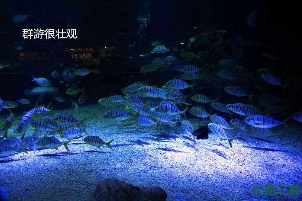 假期天津自由行142P呈现 南昌龙鱼论坛 南昌龙鱼第24张