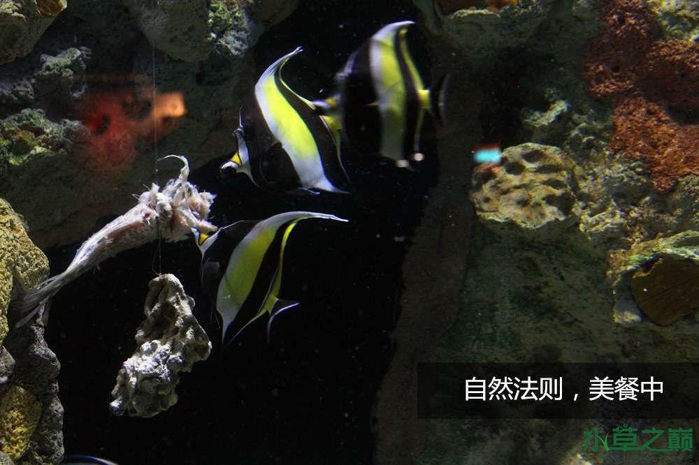 假期天津自由行142P呈现 南昌龙鱼论坛 南昌龙鱼第28张
