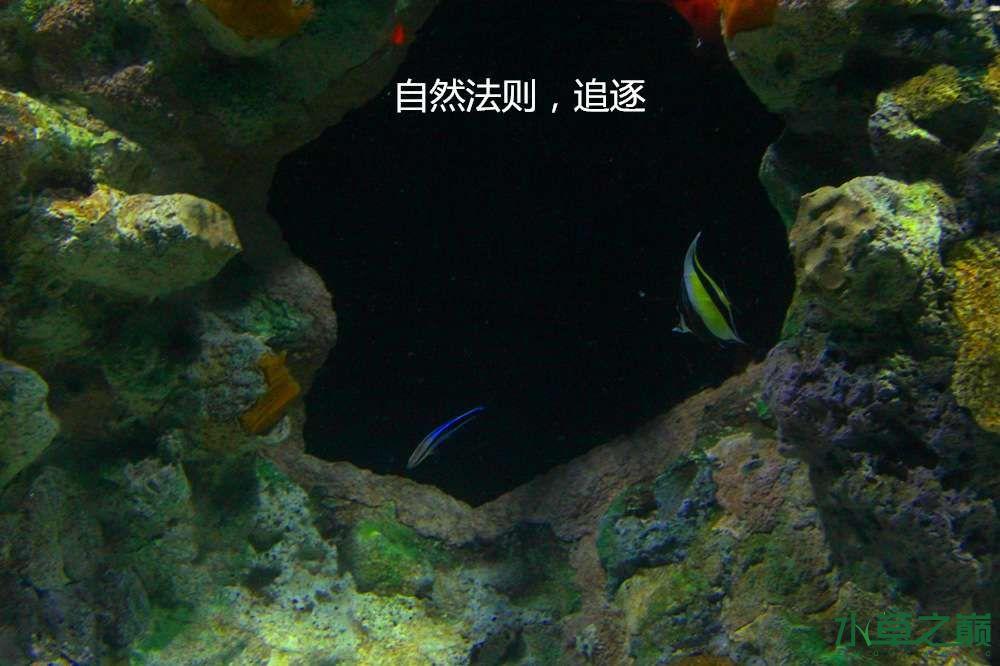 假期天津自由行142P呈现 南昌龙鱼论坛 南昌龙鱼第29张
