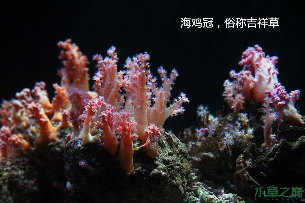 假期天津自由行142P呈现 南昌龙鱼论坛 南昌龙鱼第30张