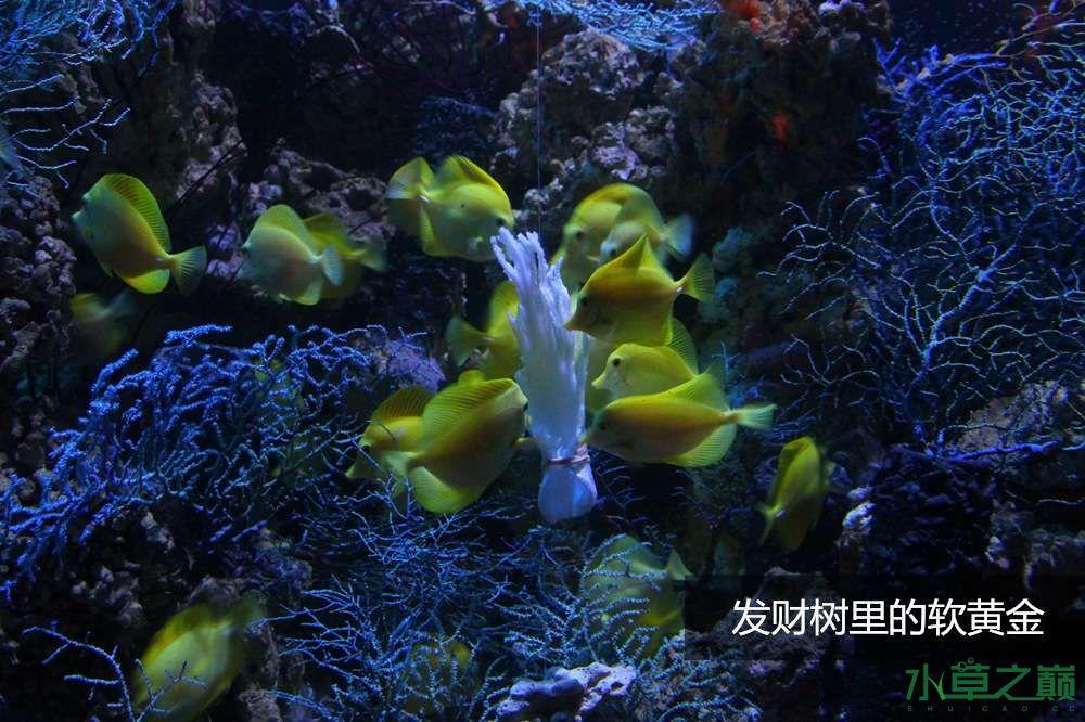 假期天津自由行142P呈现 南昌龙鱼论坛 南昌龙鱼第37张
