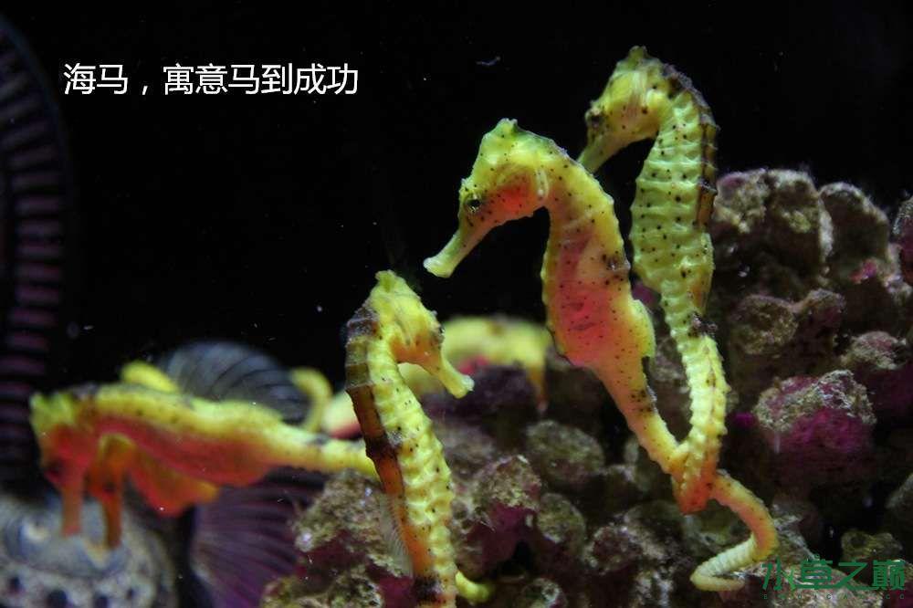 假期天津自由行142P呈现 南昌龙鱼论坛 南昌龙鱼第40张