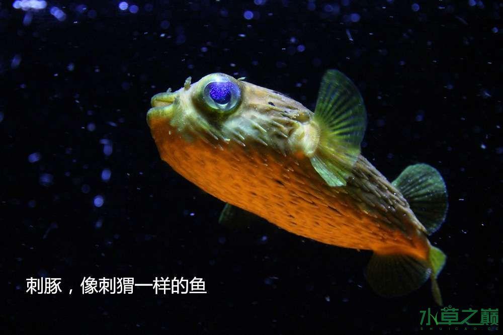 假期天津自由行142P呈现 南昌龙鱼论坛 南昌龙鱼第41张