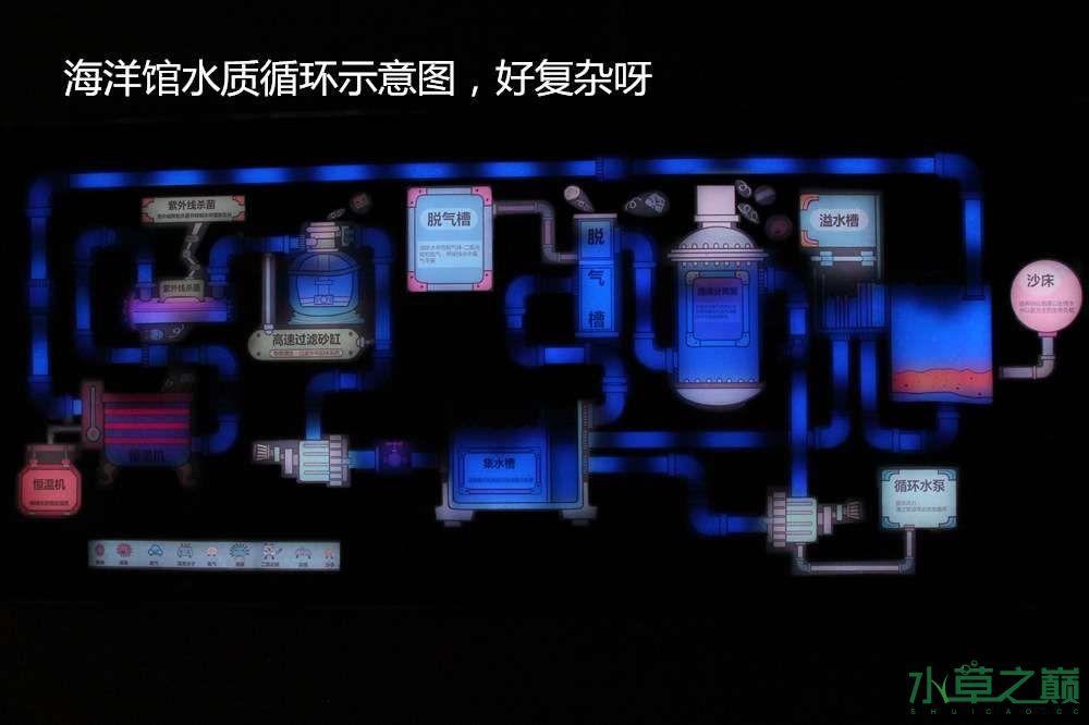 假期天津自由行142P呈现 南昌龙鱼论坛 南昌龙鱼第46张