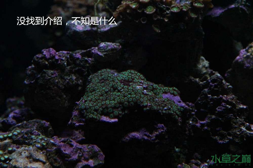 假期天津自由行142P呈现 南昌龙鱼论坛 南昌龙鱼第47张