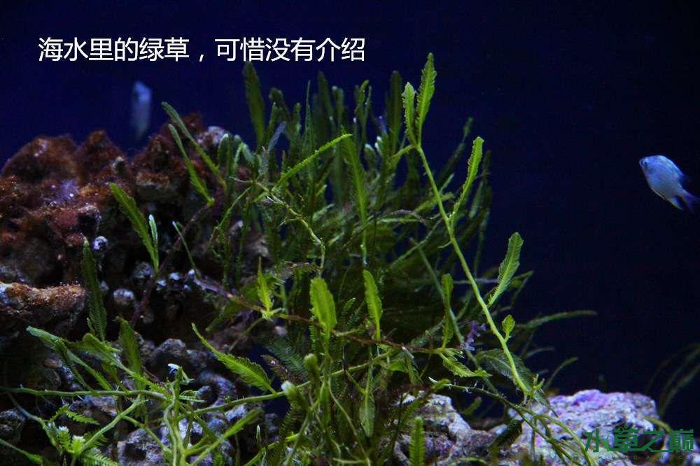 假期天津自由行142P呈现 南昌龙鱼论坛 南昌龙鱼第49张