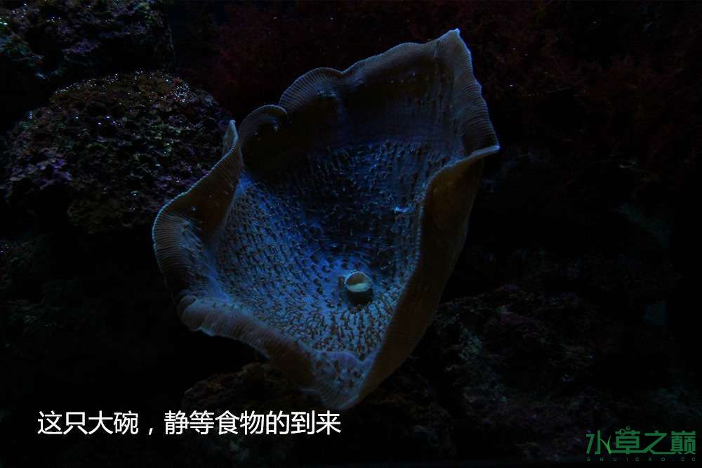 假期天津自由行142P呈现 南昌龙鱼论坛 南昌龙鱼第50张