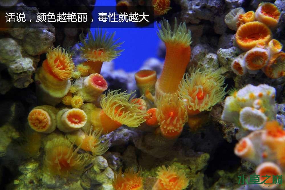 假期天津自由行142P呈现 南昌龙鱼论坛 南昌龙鱼第51张