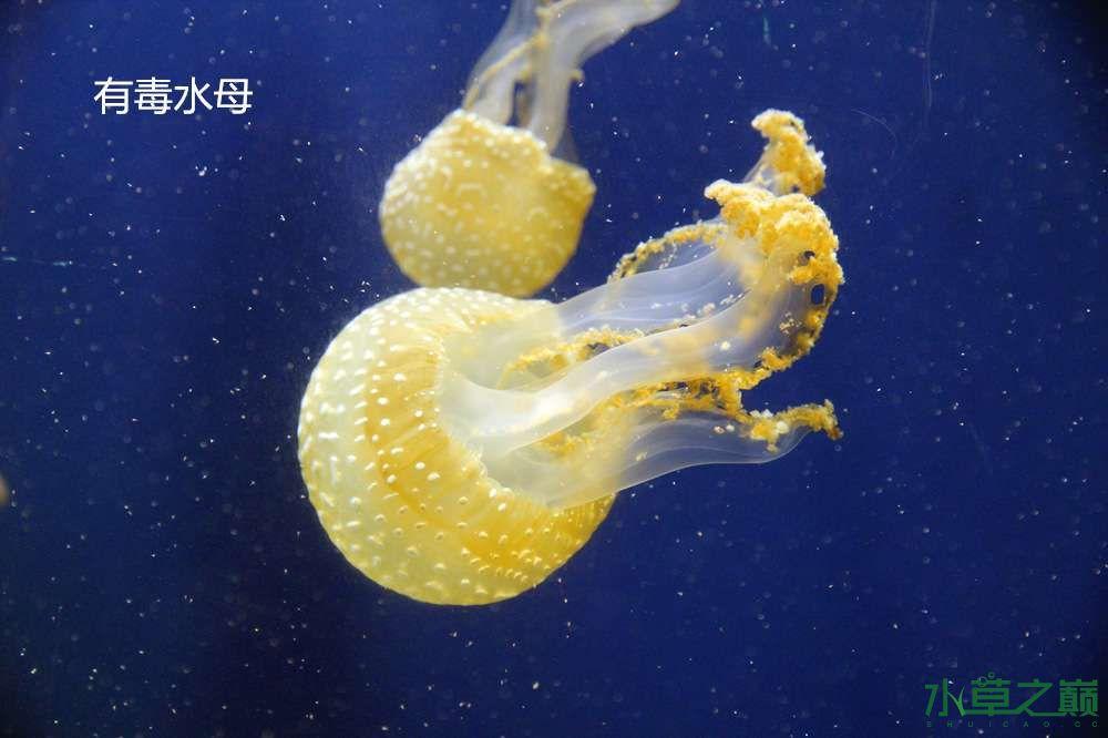 假期天津自由行142P呈现 南昌龙鱼论坛 南昌龙鱼第52张