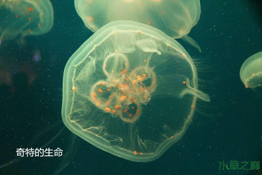 假期天津自由行142P呈现 南昌龙鱼论坛 南昌龙鱼第55张