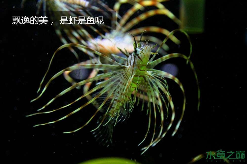 假期天津自由行142P呈现 南昌龙鱼论坛 南昌龙鱼第44张