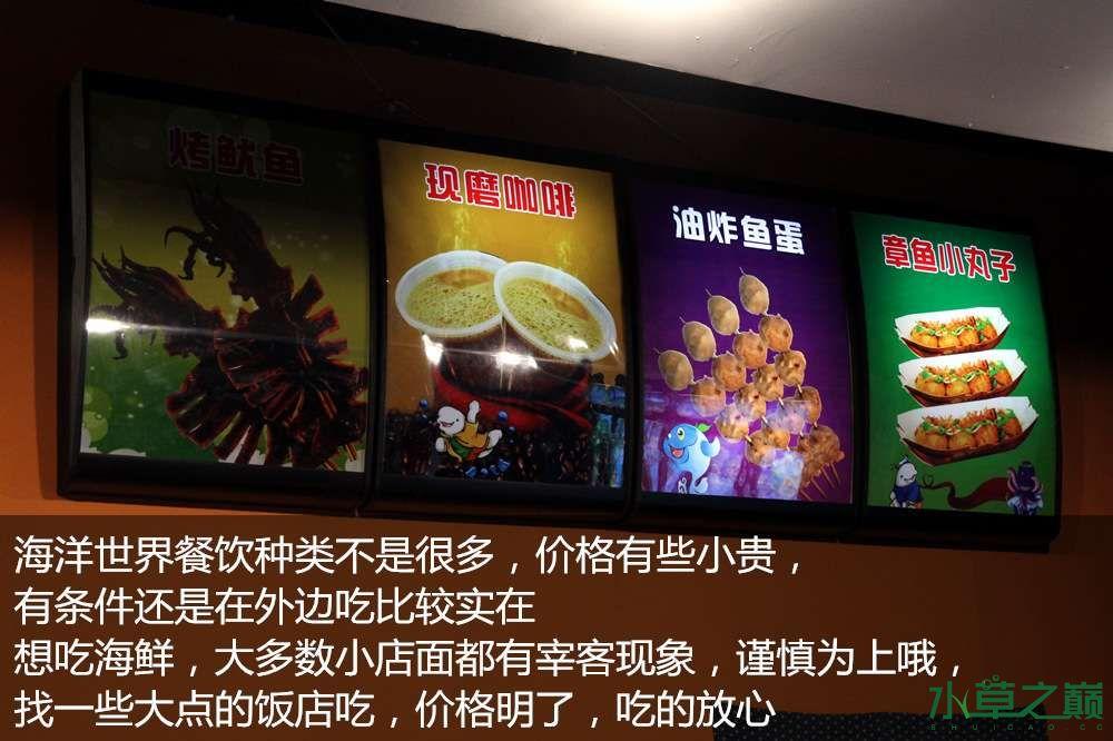 假期天津自由行142P呈现 南昌龙鱼论坛 南昌龙鱼第58张