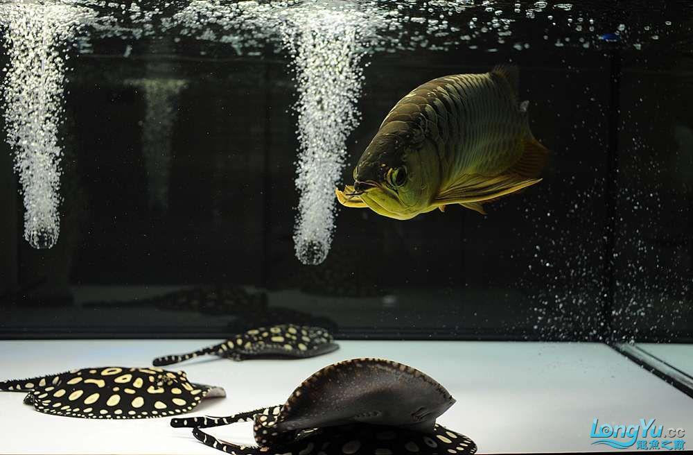 混养——你永远是缸中的主角 渭南水族批发市场 渭南龙鱼第17张