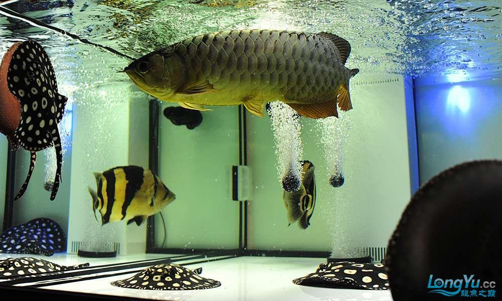 混养——你永远是缸中的主角 渭南水族批发市场 渭南龙鱼第29张