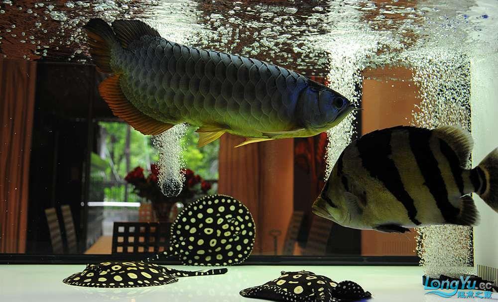 混养——你永远是缸中的主角 渭南水族批发市场 渭南龙鱼第31张