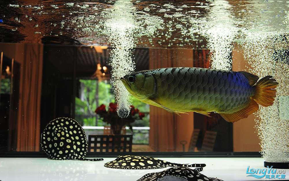 混养——你永远是缸中的主角 渭南水族批发市场 渭南龙鱼第33张
