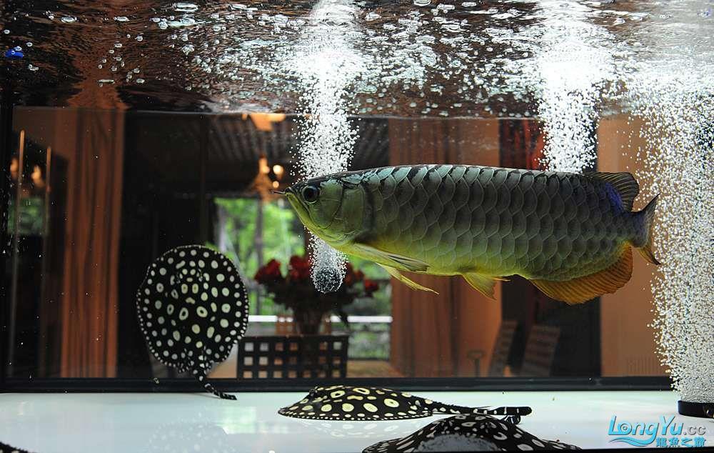 混养——你永远是缸中的主角 渭南水族批发市场 渭南龙鱼第34张