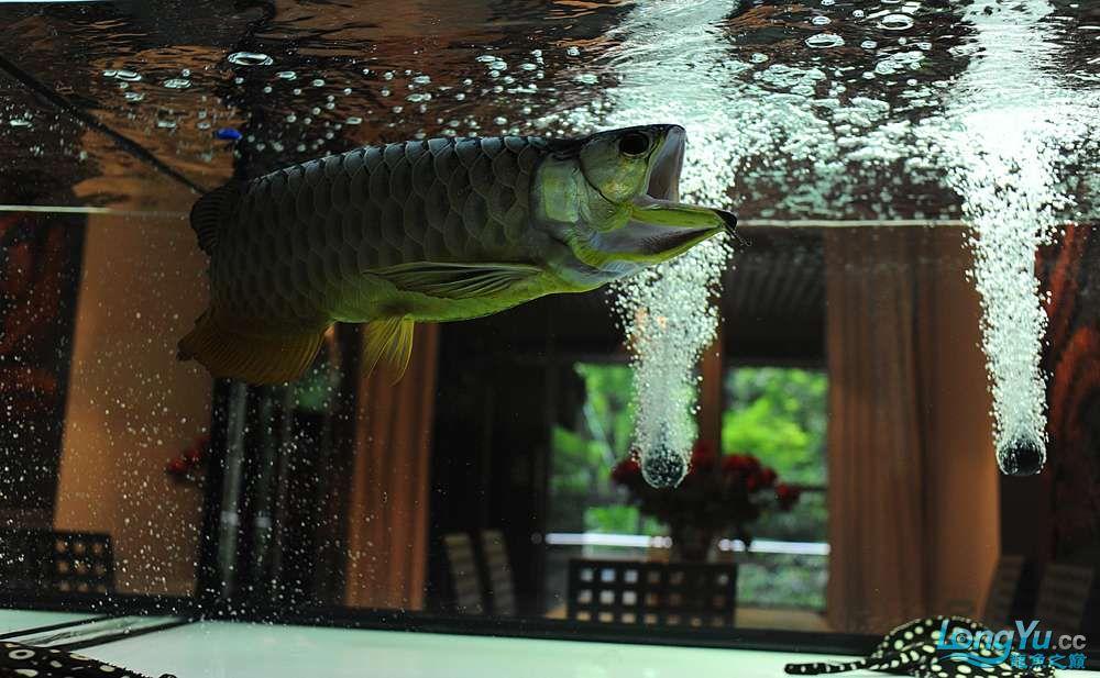 混养——你永远是缸中的主角 渭南水族批发市场 渭南龙鱼第39张