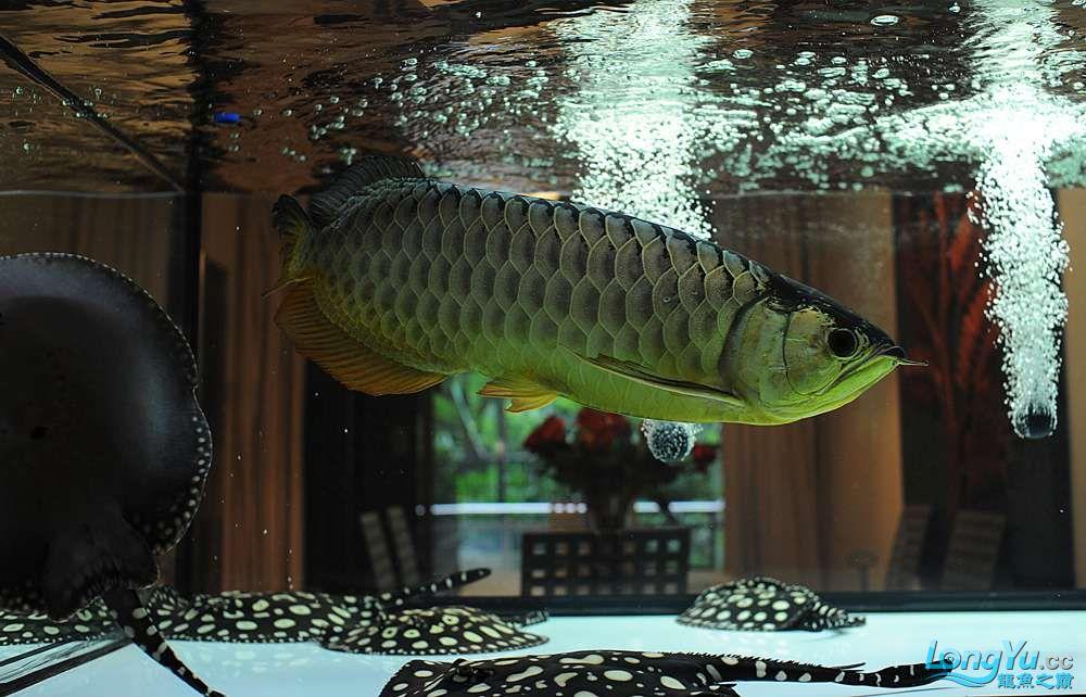 混养——你永远是缸中的主角 渭南水族批发市场 渭南龙鱼第44张