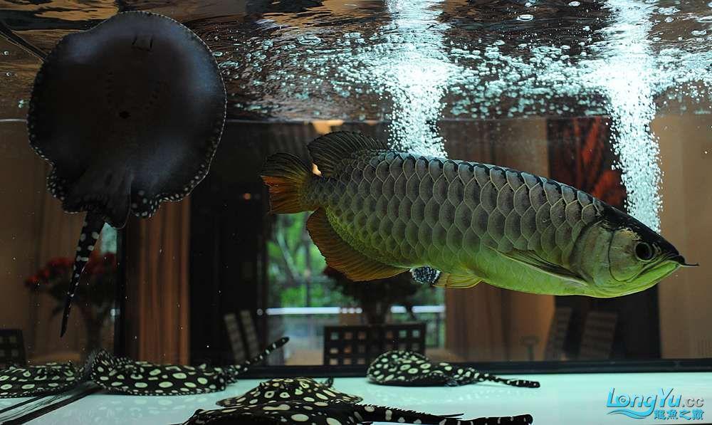 混养——你永远是缸中的主角 渭南水族批发市场 渭南龙鱼第46张
