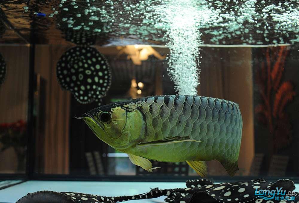混养——你永远是缸中的主角 渭南水族批发市场 渭南龙鱼第48张
