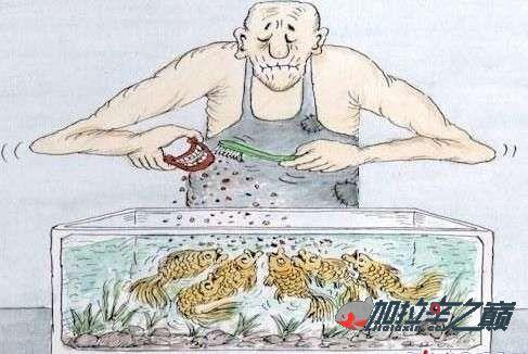 加拉辛如何换水喂食注意事项简单实用 渭南龙鱼论坛 渭南龙鱼第2张