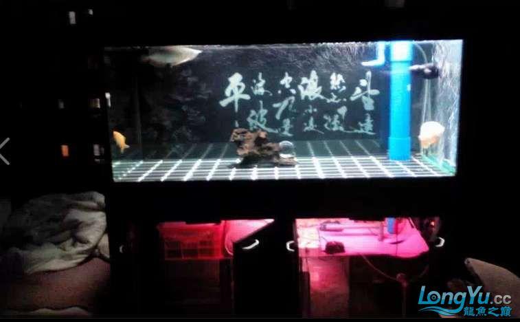 申精 鱼缸历时50天终于完全体小鱼已经入缸外加牛心汉堡制作超多图杀死猫 南充龙鱼论坛 南充水族批发市场第3张
