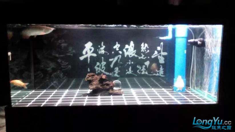 申精 鱼缸历时50天终于完全体小鱼已经入缸外加牛心汉堡制作超多图杀死猫 南充龙鱼论坛 南充水族批发市场第11张