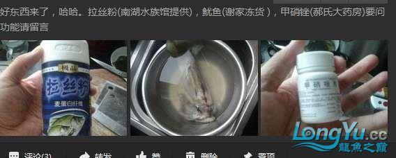 申精 鱼缸历时50天终于完全体小鱼已经入缸外加牛心汉堡制作超多图杀死猫 南充龙鱼论坛 南充水族批发市场第17张