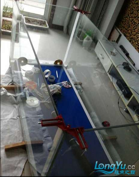 申精 鱼缸历时50天终于完全体小鱼已经入缸外加牛心汉堡制作超多图杀死猫 南充龙鱼论坛 南充水族批发市场第35张