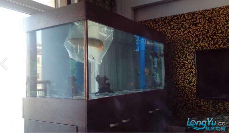 申精 鱼缸历时50天终于完全体小鱼已经入缸外加牛心汉堡制作超多图杀死猫 南充龙鱼论坛 南充水族批发市场第57张
