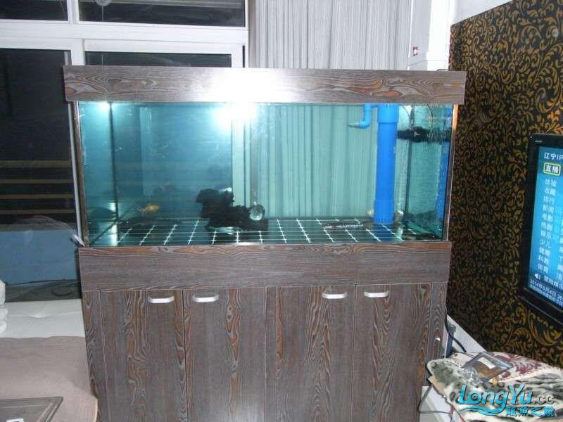 申精 鱼缸历时50天终于完全体小鱼已经入缸外加牛心汉堡制作超多图杀死猫 南充龙鱼论坛 南充水族批发市场第80张
