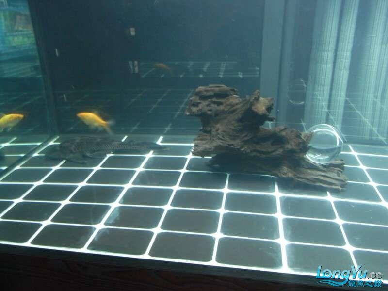 申精 鱼缸历时50天终于完全体小鱼已经入缸外加牛心汉堡制作超多图杀死猫 南充龙鱼论坛 南充水族批发市场第87张