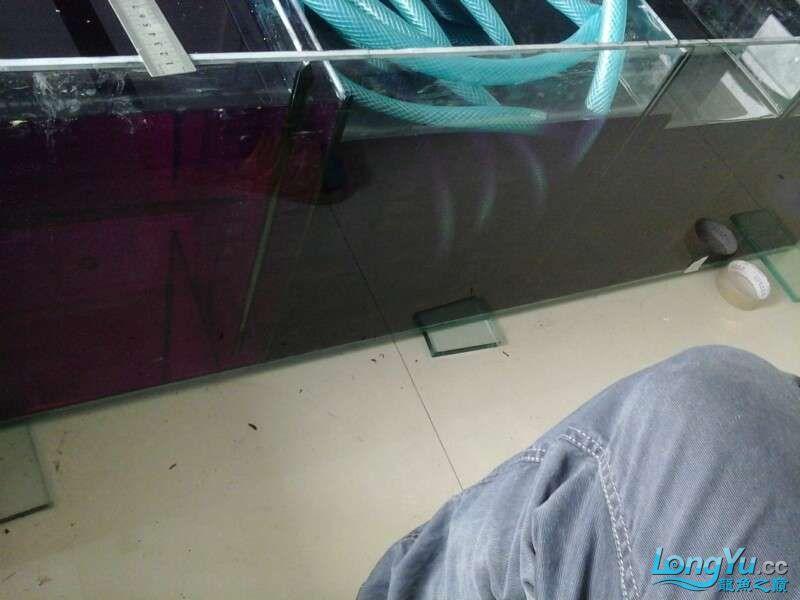 申精 鱼缸历时50天终于完全体小鱼已经入缸外加牛心汉堡制作超多图杀死猫 南充龙鱼论坛 南充水族批发市场第133张