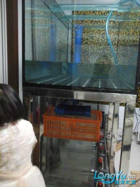 申精 鱼缸历时50天终于完全体小鱼已经入缸外加牛心汉堡制作超多图杀死猫 南充龙鱼论坛 南充水族批发市场第146张
