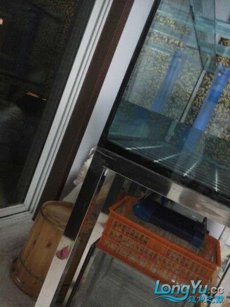 申精 鱼缸历时50天终于完全体小鱼已经入缸外加牛心汉堡制作超多图杀死猫 南充龙鱼论坛 南充水族批发市场第147张