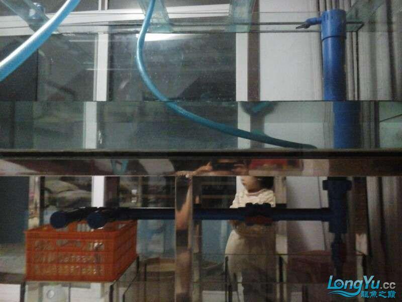 申精 鱼缸历时50天终于完全体小鱼已经入缸外加牛心汉堡制作超多图杀死猫 南充龙鱼论坛 南充水族批发市场第149张