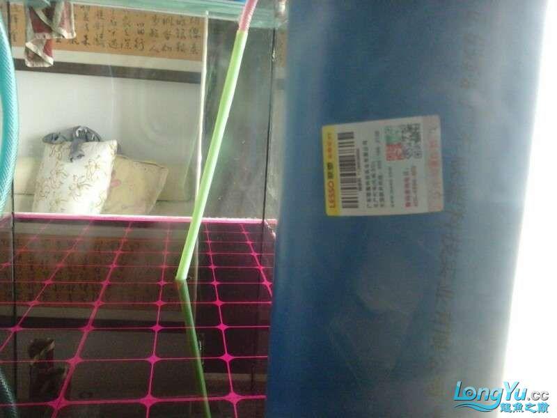 申精 鱼缸历时50天终于完全体小鱼已经入缸外加牛心汉堡制作超多图杀死猫 南充龙鱼论坛 南充水族批发市场第150张
