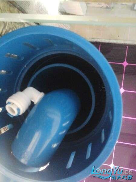 申精 鱼缸历时50天终于完全体小鱼已经入缸外加牛心汉堡制作超多图杀死猫 南充龙鱼论坛 南充水族批发市场第152张