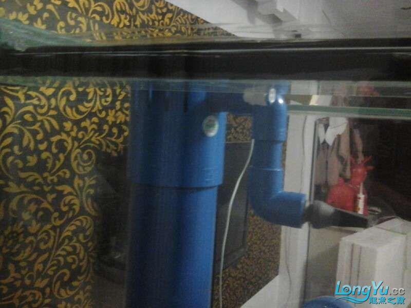 申精 鱼缸历时50天终于完全体小鱼已经入缸外加牛心汉堡制作超多图杀死猫 南充龙鱼论坛 南充水族批发市场第158张