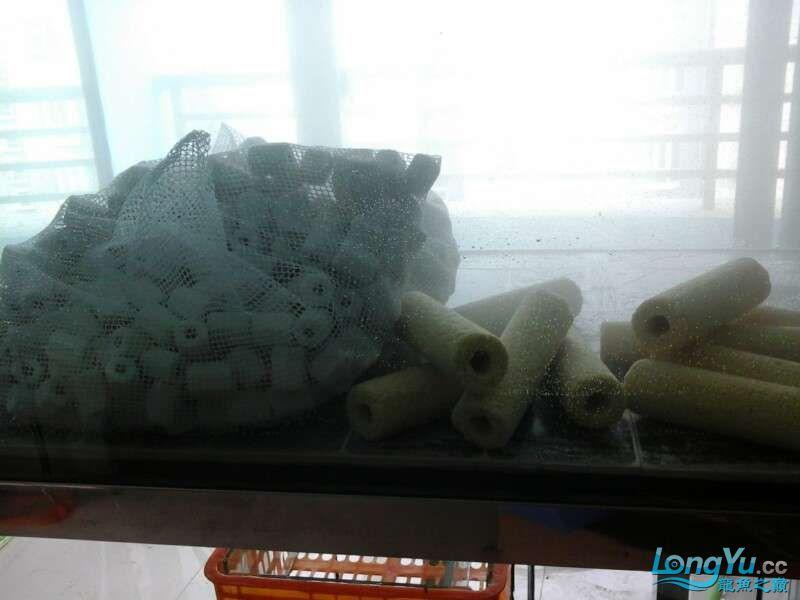 申精 鱼缸历时50天终于完全体小鱼已经入缸外加牛心汉堡制作超多图杀死猫 南充龙鱼论坛 南充水族批发市场第170张