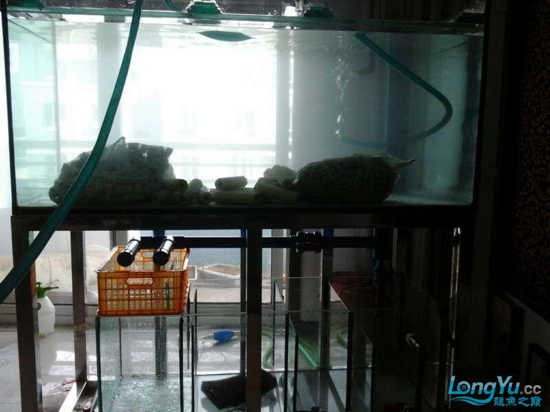 申精 鱼缸历时50天终于完全体小鱼已经入缸外加牛心汉堡制作超多图杀死猫 南充龙鱼论坛 南充水族批发市场第172张