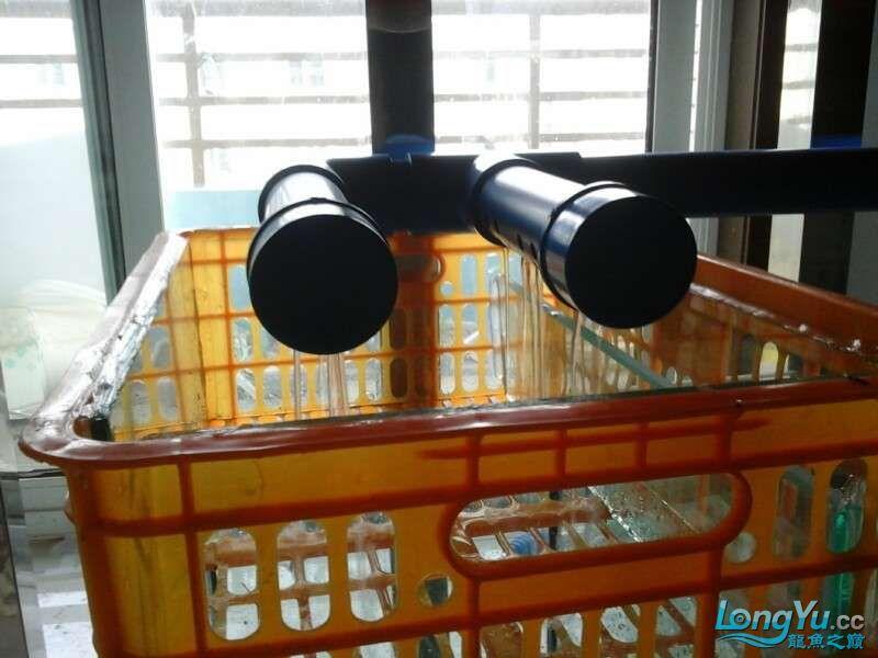 申精 鱼缸历时50天终于完全体小鱼已经入缸外加牛心汉堡制作超多图杀死猫 南充龙鱼论坛 南充水族批发市场第174张