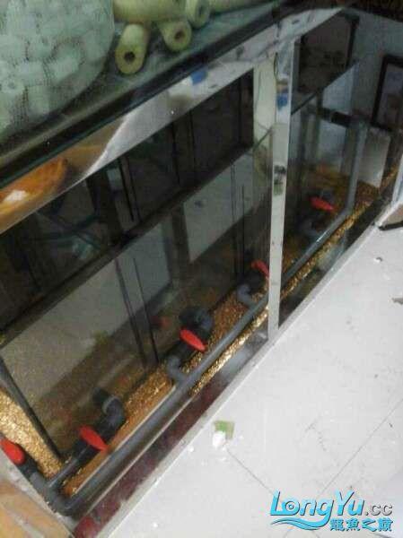 申精 鱼缸历时50天终于完全体小鱼已经入缸外加牛心汉堡制作超多图杀死猫 南充龙鱼论坛 南充水族批发市场第175张